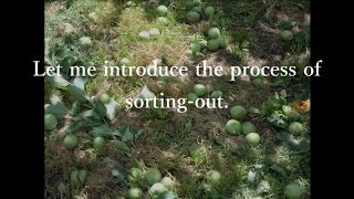 Gambar cover The Process of Sorting-Out【Apple University】