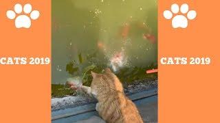 Cats2019.exe