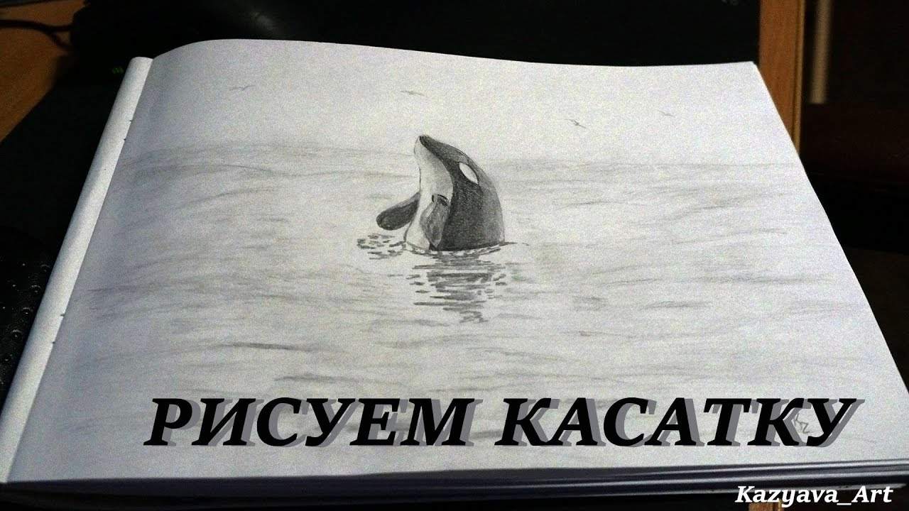 Free dolphins Essays and Papers  123helpmecom