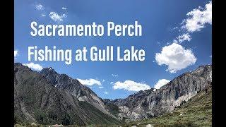SACRAMENTO PERCH FISHING AT GULL LAKE
