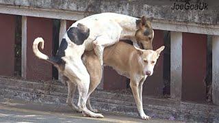 Thai street Dogs meeting Enjoy a season by rural dog