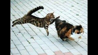 Cats Kombat vol.1