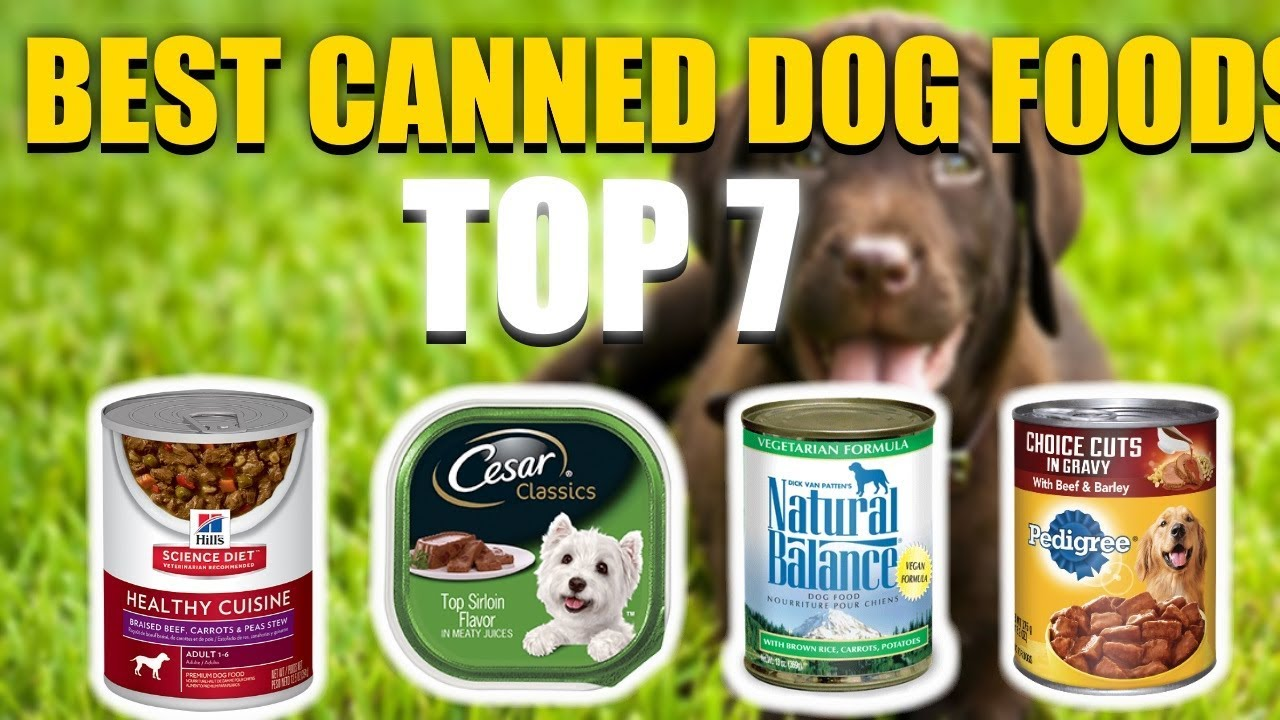 Best Canned Dog Food >> Question Do You Refrigerate Wet Dog Food 2019