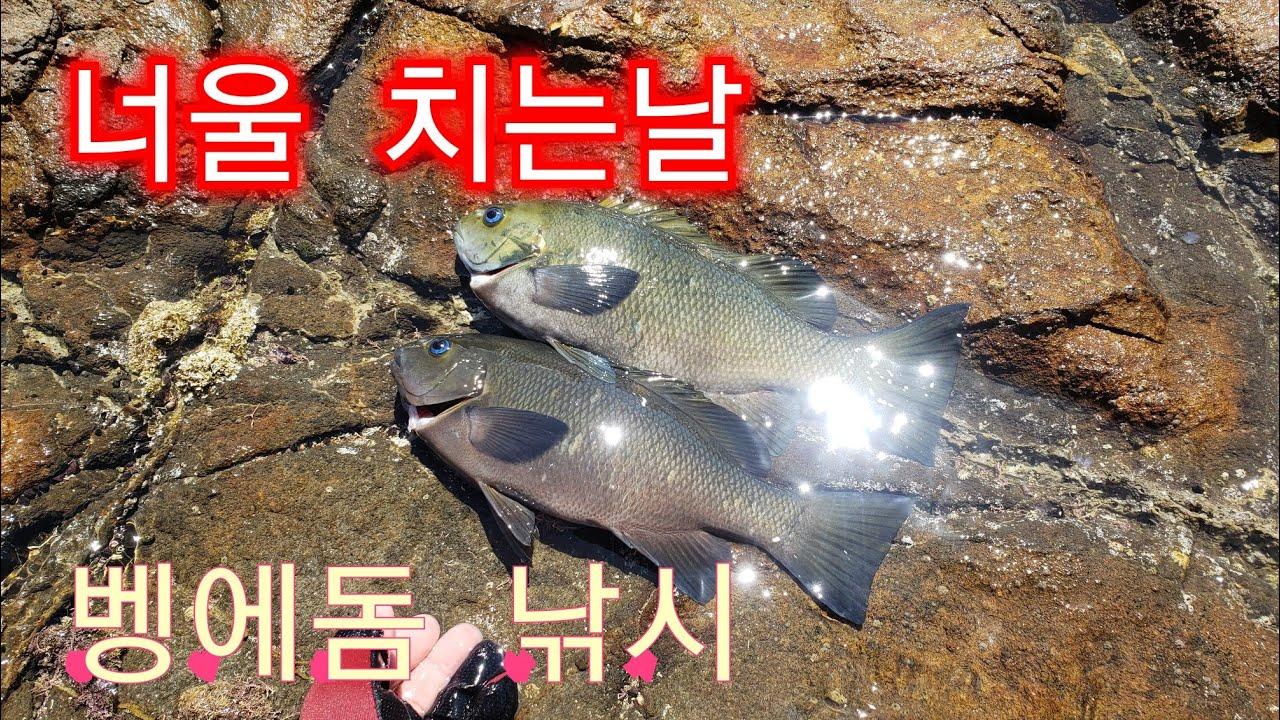 너울에 강풍까지 부는날 벵에돔낚시 Rock Fishing Opaleye / Calico bass / Palos Verdes