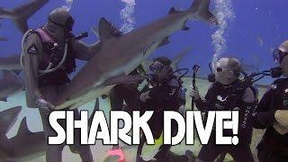 Shark Dive & Interview with My Hero Cristina Zenato Grand Bahama Island