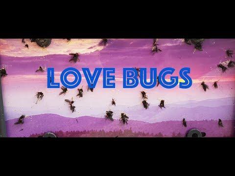Floride 2018 les Love bugs !