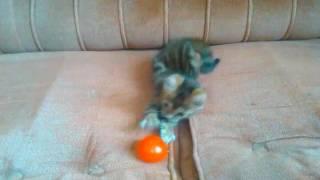 Бенгальский котенок 2 месяца