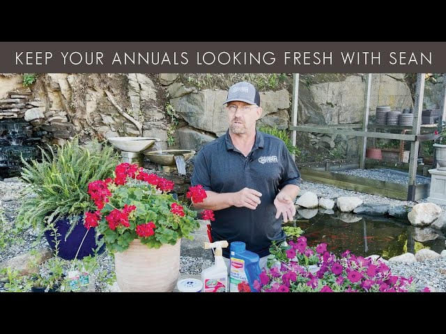 6/25/2021 Keep Your Annuals Looking Fresh with Sean