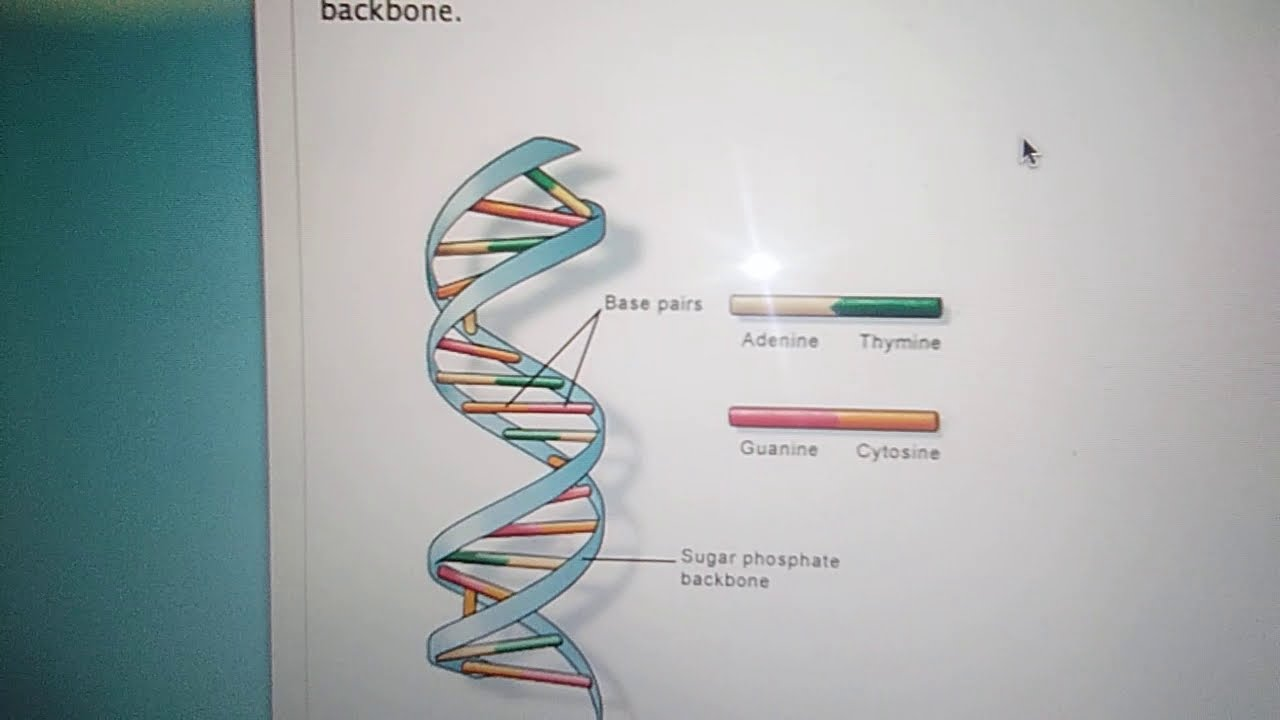 What is DNA and why Hebrews do not use it? DNA is not accurate science or for ancestry to Adam.