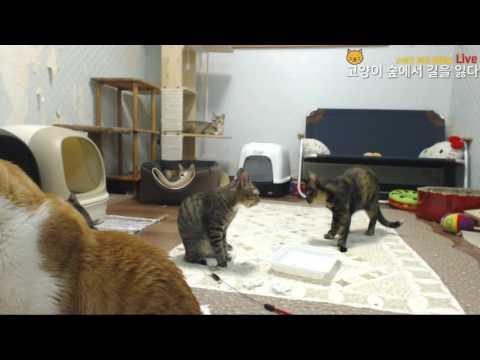 고양이숲의 족발 특식타임!!!