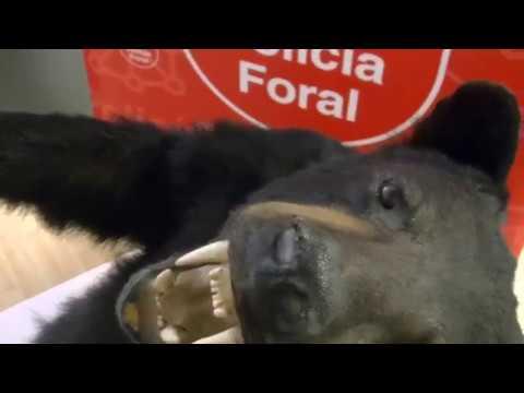 Imputado en Tudela por traficar con especies protegidas