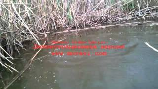 Ловля карпа на горох(рыбалка., 2014-05-25T12:59:52.000Z)
