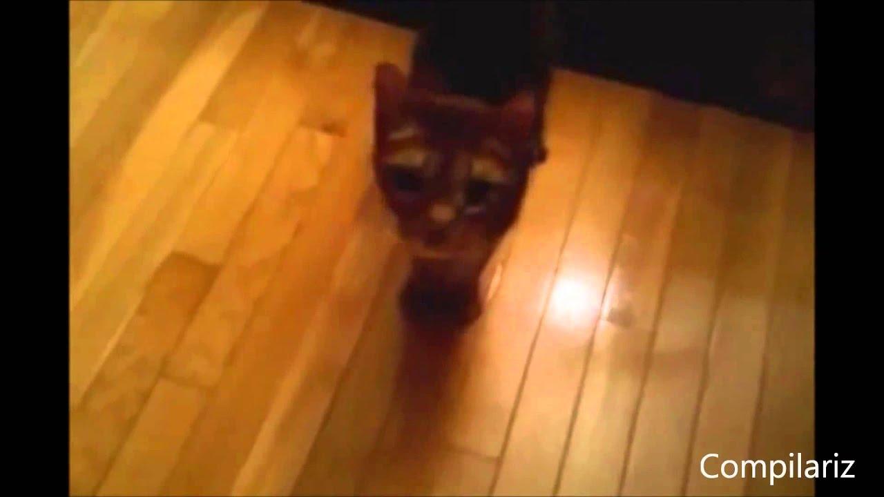 Прикол! Кошки говорят!