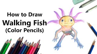 How to Draw a Walking Fish with Color Pencils [Time Lapse]