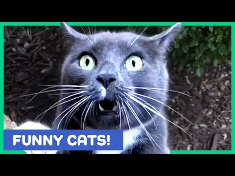 FUNNY CAT VIDEOS TO WATCH WITH YOUR VALENTINE! ❤️