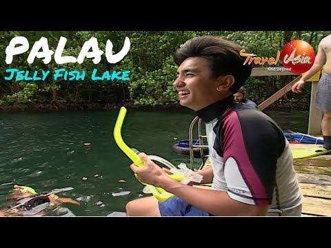 Micronesia - Palau - The amazing jelly fish lake!