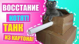 ТАНК ИЗ КАРТОНА ДЛЯ КОТЕНКА - ВОССТАНИЕ КОТЯТ