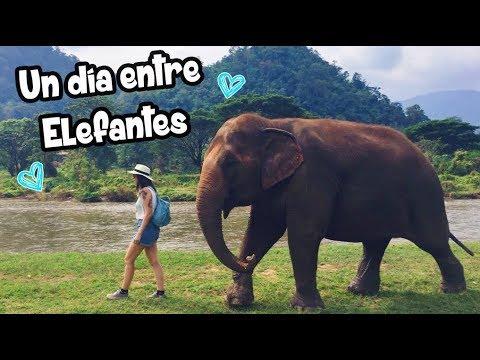 ELEFANTES EN TAILANDIA. ELEPHANT NATURE PARK |  VLOG 6