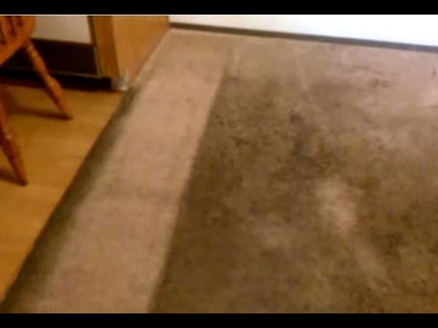 como lavar alfombras o carpetas ( How to clean carpet) - YouTube