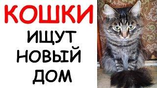 Пристраиваем кошек в добрые руки