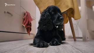 В Крыму собаку пытались объявить террористом