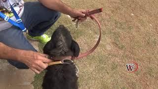 DRONE resgata CACHORRO quase MORRENDO wanzam fpv