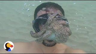 Octopus Stuck on Man