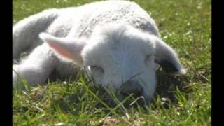 Bæ, bæ lille lam. Norsk, med tekst