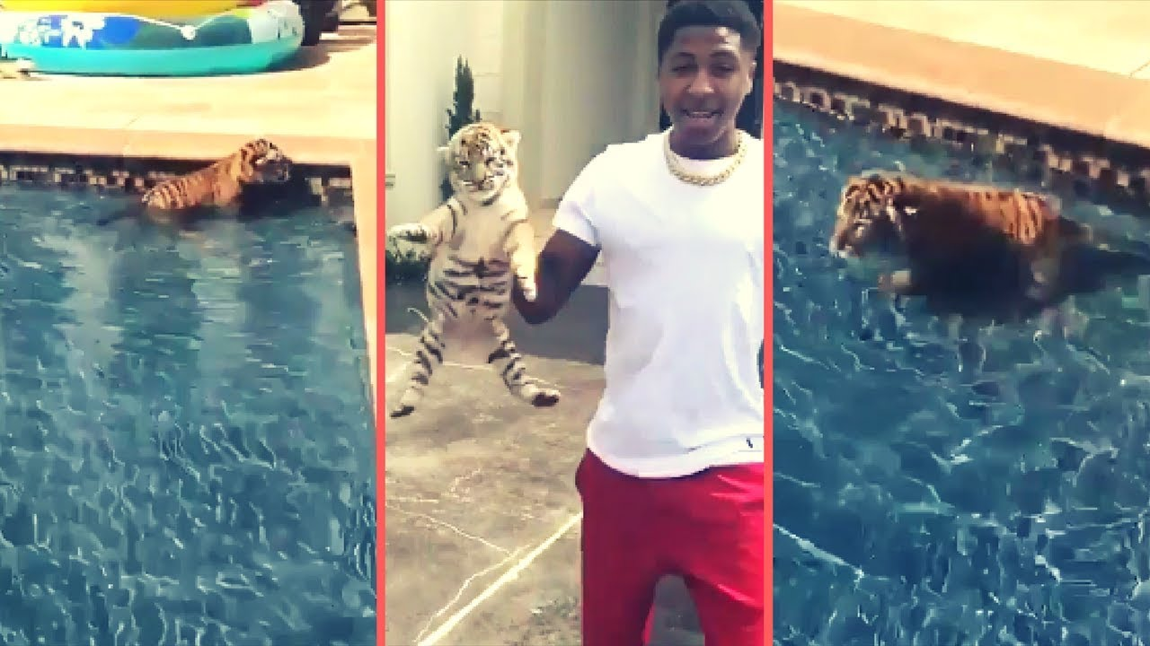 NBA YoungBoy Lets His Pet Exotic Tiger Go Swimming While