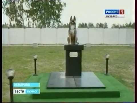 Как памятник собаке появился на человеческом кладбище