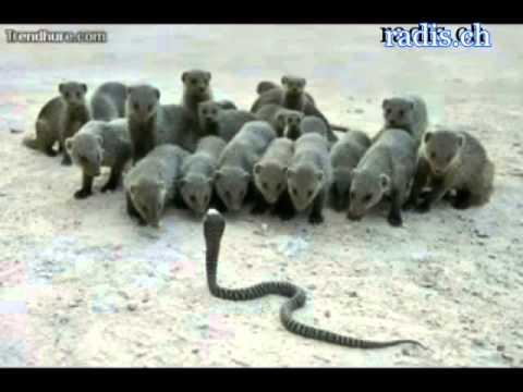 Die Lustige Welt Der Tiere Youtube