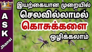 அதிக செலவில்லாமல் கொசுக்களை இயற்கையான முறையில் ஒழிப்பது எப்படி ? How to Get Rid of Mosquitoes ?