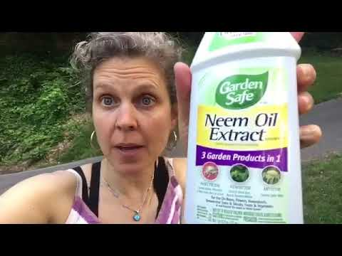 How to use Neem Oil Extract for organic gardening as a insecticide, fungicide, and mildew deterrent!