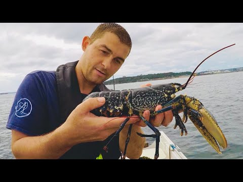 Hauling Lobster Pots And Float Fishing For Bass