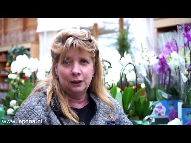 Gazon groener in 6 stappen | Lepona Tuinarrangeurs