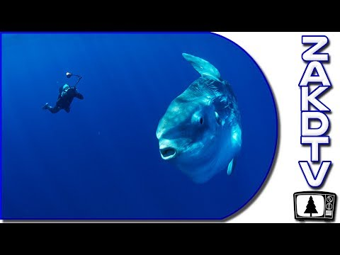 INTERESTING AQUATIC NEWS STORIES | New Sunfish Species | SLEEPING Sperm Whales | 2 Elephants Rescue