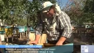Пчеловоды Молдовы начали подготовку пчел к зимовке