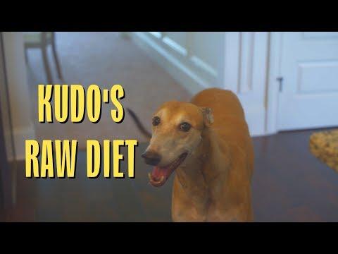 Raw Diet / Feeding Greyhound