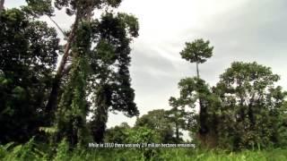 Documentary of BP REDD+ (Subtitle)