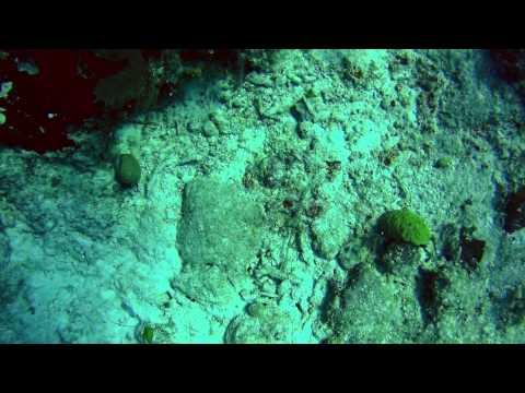 Diving at Grand Turk