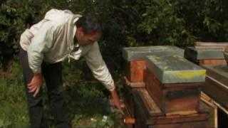 Le Titanic Apicole: Terreur Pesticide 06