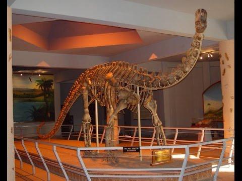 The Dinosaurium Gallery - BM Birla Science Centre ...