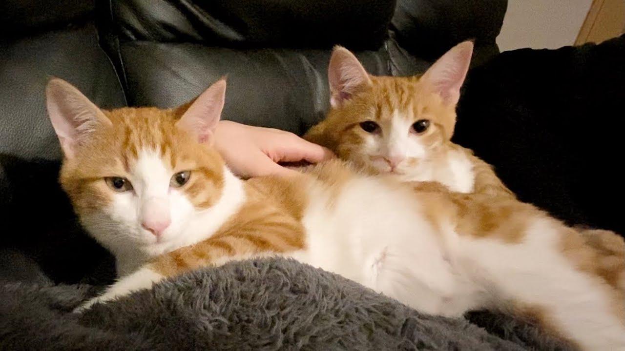 激しくふみふみ攻撃をする双子猫が可愛すぎた…