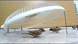 مصيدة طيور   كيفية صنع مصيدة طيور فعالة