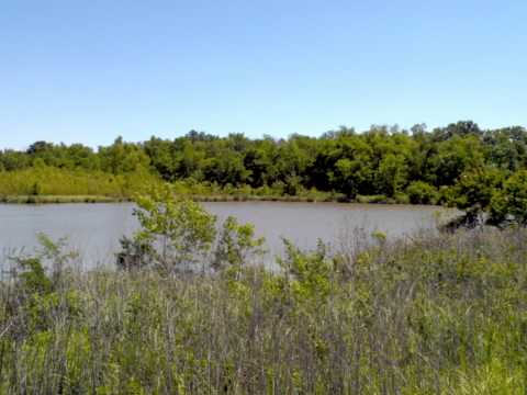 Mossy Oak Properties Cache River Land & Farm ....73 Ac Jacksonville