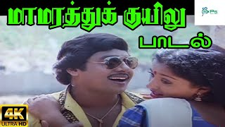 Maamarathu Kuyilu     மாமரத்து குயிலு     Ilaiyaraja,K. S. Chithra  Love Duet H D Song