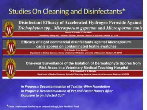 How Animal Shelters Are Beating Ringworm (And Yours Can, Too!) - Webcast