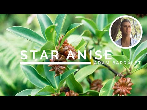Star Anise The Oil of Deep Mystery