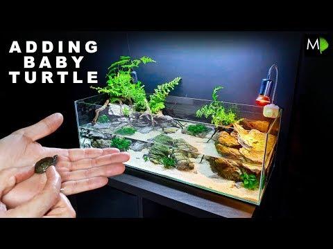 ADDING A BABY TURTLE TO NEW HABITAT!! || MD FISH TANKS