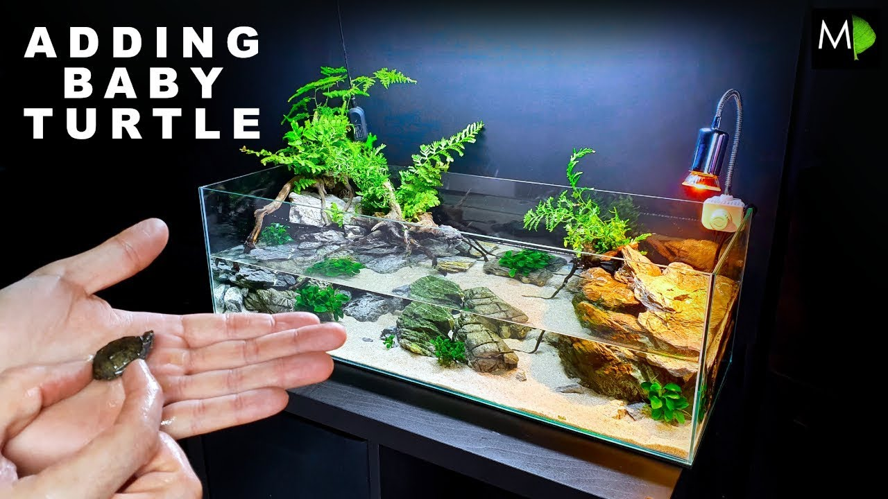 Adding A Baby Turtle To New Habitat Md Fish Tanks Youtube